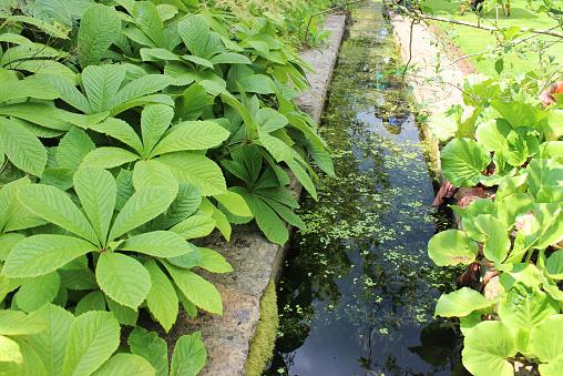 50 Pictures of Backyard Garden Waterfalls (Ideas & Designs ... |Gentle Waterfall Pond