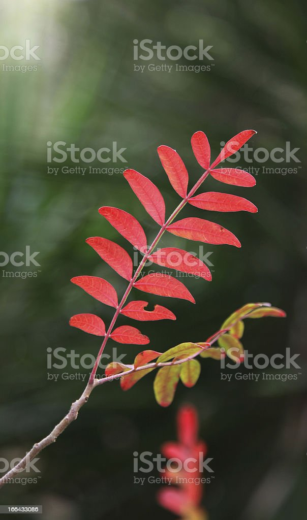 Small Autumn Leaves in South Carolina royalty-free stock photo