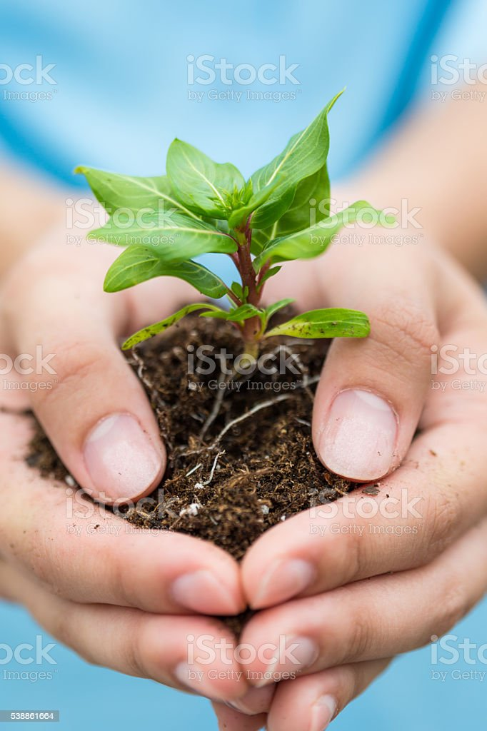 Small baby plant in hands stock photo
