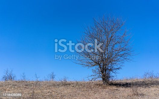 Small bare tree against the sky