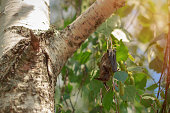istock A small bat on birch branches 1030702534
