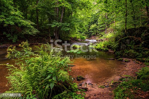 Fresh green vegetation and clear water in picturesque calm bay with small beach in small mountain river. River Kamenice, Czech republic.