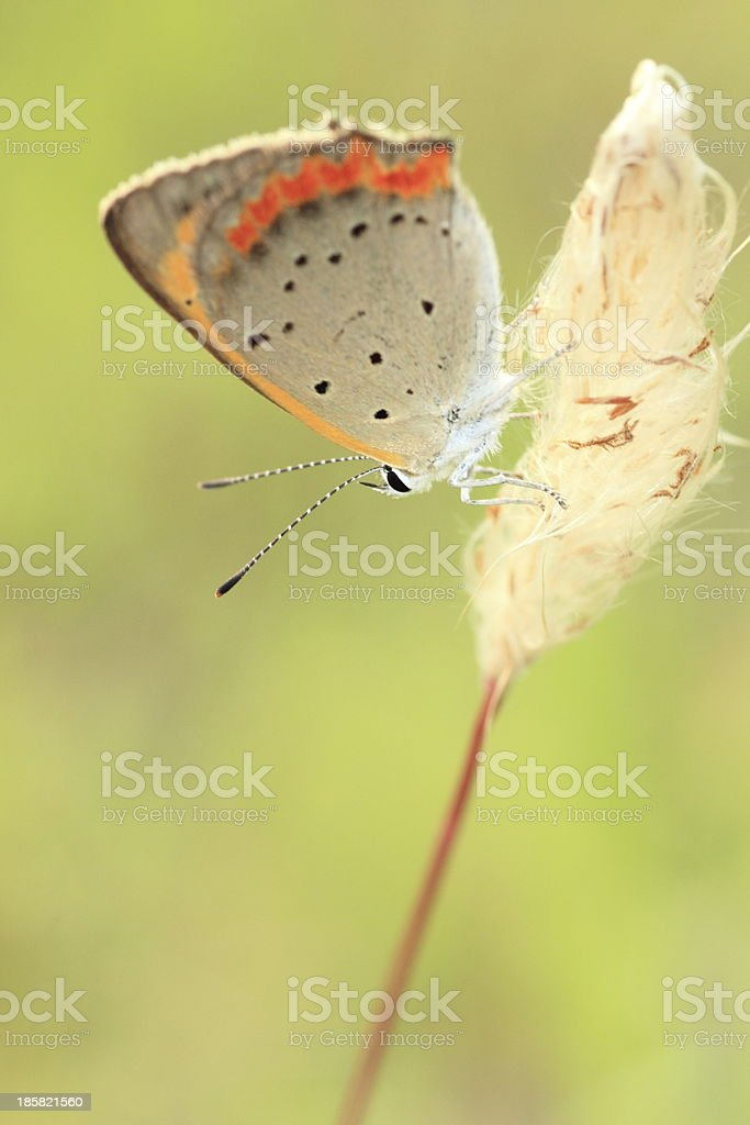 Small beautiful butter fly on strow stock photo