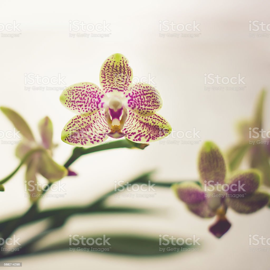 Small Beautiful Orchid Flowers Stock Photo More Pictures Of Awe