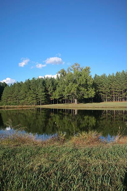 Small beautiful pond