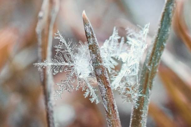 Small beautiful snowflake in the frozen grass stock photo