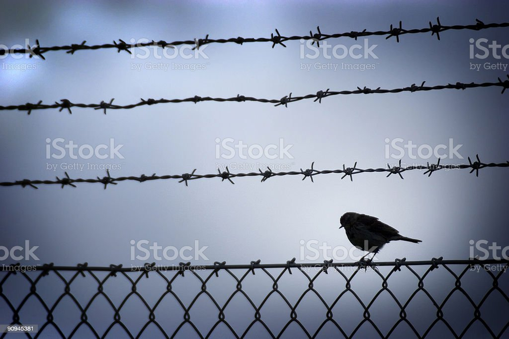 Small bird and barbed wire. stock photo
