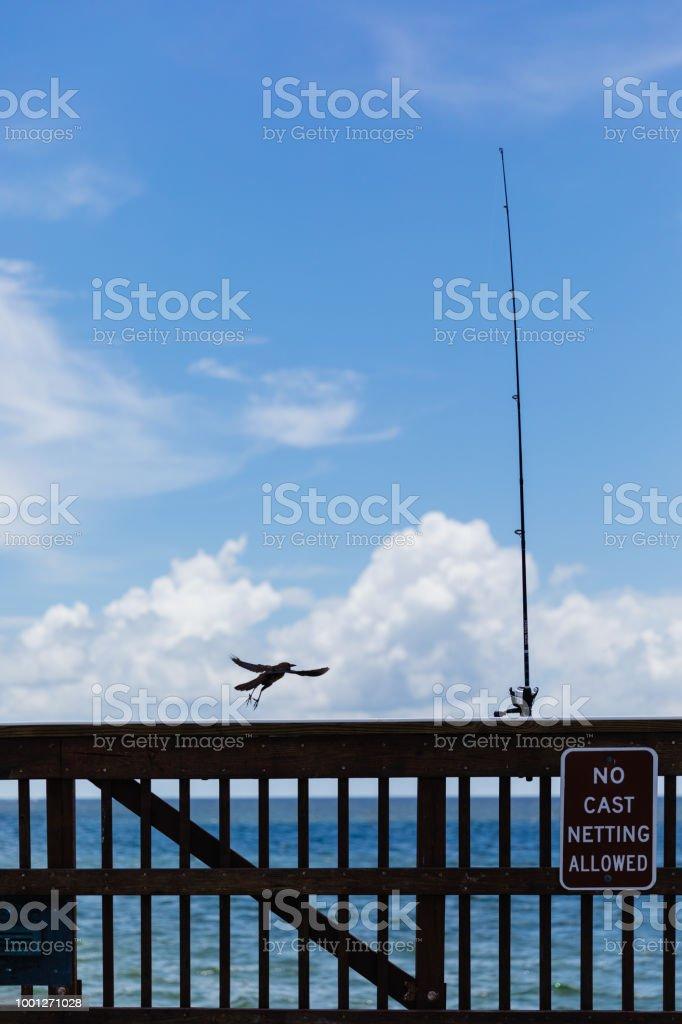 Kleiner Vogel durch den Ozean – Foto