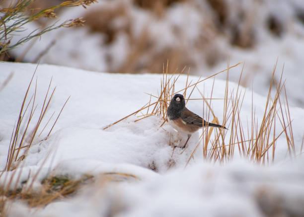 Small bird in the snow stock photo
