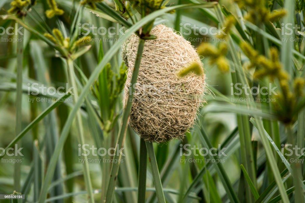 Petit nid d'oiseau - Photo de Arbre libre de droits