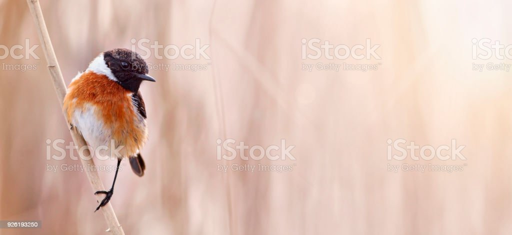 Small bird sitting on a reed stock photo
