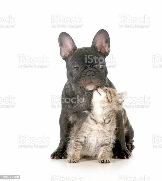 Small black dog hugging small gray kitten picture id180777788?b=1&k=6&m=180777788&s=612x612&h=4x0qt6m7mlbn17urzt0pxe na2rgv8rgsibx7wcbcs8=