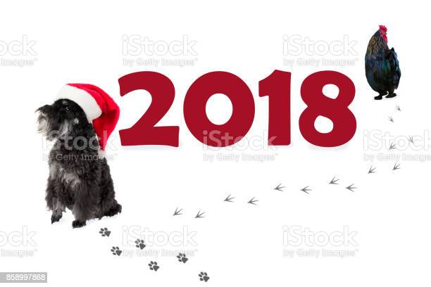 Small black dog in santas hat as a symbol of 2018 and rooster going picture id858997868?b=1&k=6&m=858997868&s=612x612&h=fujxdqt bcthqujb35tlgamflinsvzhclcj1c2r5a98=