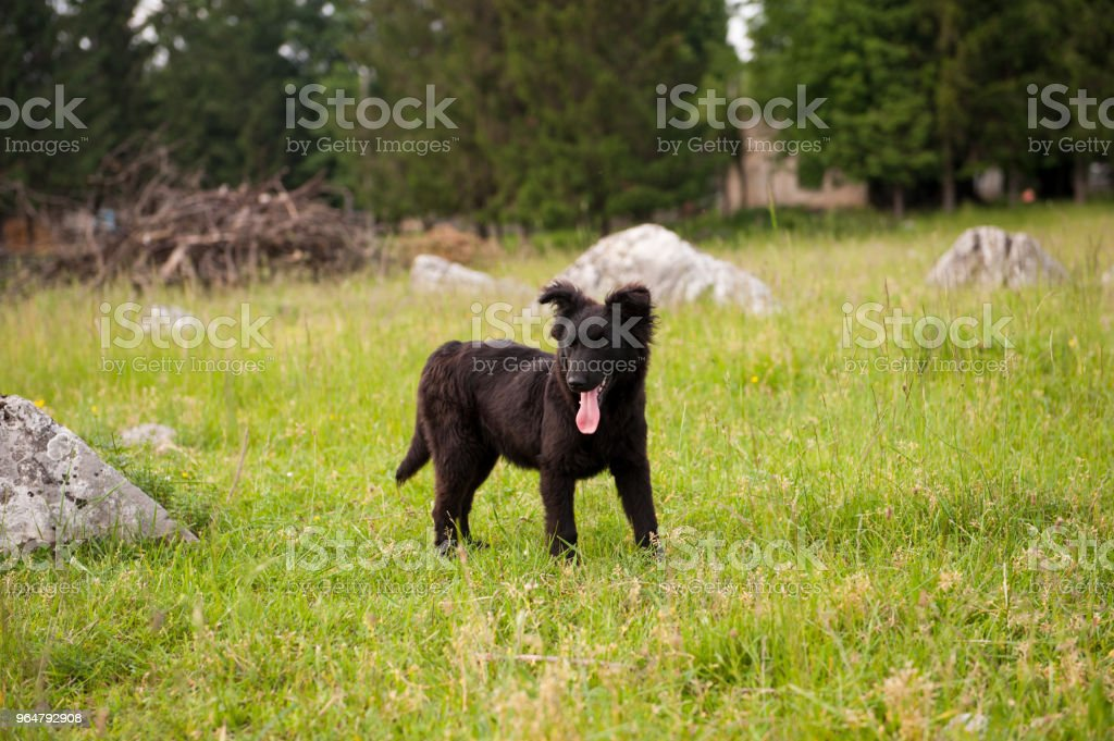 Small black puppy in the field. Green grass. Outdoor. royalty-free stock photo