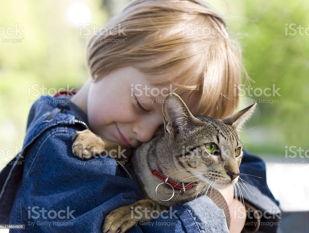 A small blonde male with an Asian breed cat stock photo
