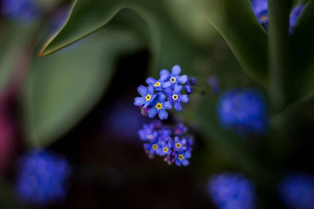 Kleine blaue lila Blumen zentriert – Foto