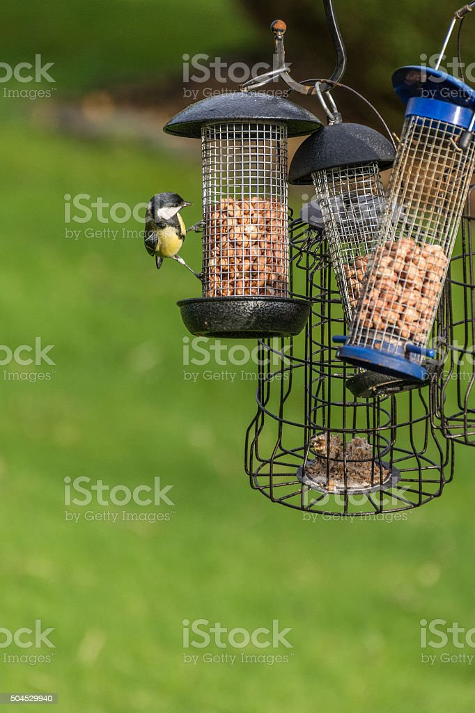 Small Blue Tit Eating Out Of Feeder In Garden. stock photo