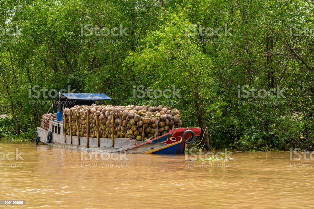 Small boat full of coconuts on muddy river in Vietnam stock photo