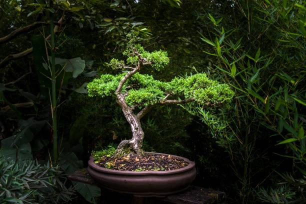 Petit bonsaï à la pièce - Photo