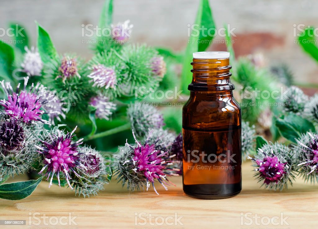Small bottle of burdock extract (oil, tincture, infusion) stock photo