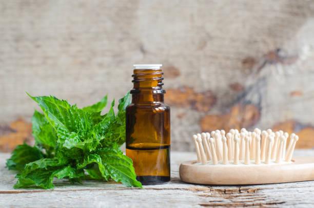 eski ahşap arka plan üzerinde esansiyel nane yağı ve ahşap saç fırçası ile küçük şişe. taze spermint yaprakları yakın. aromaterapi, spa ve bitkisel ilaç maddeleri. kopyalama alanı - kıvırcık nane stok fotoğraflar ve resimler