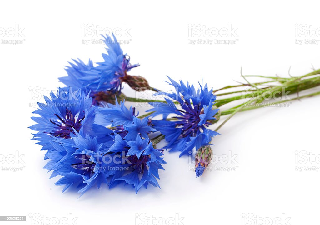 Small bouquet of blue corn flower stock photo