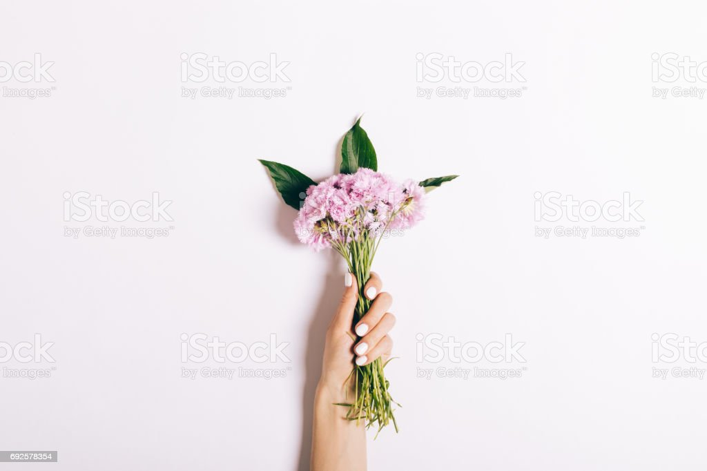 Small bouquet of pink carnations in a female hand with a manicure on a white background