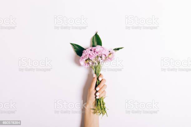Small bouquet of pink carnations in a female hand with a manicure on picture id692578354?b=1&k=6&m=692578354&s=612x612&h=ejdqvyho8v4vpnw ap7l1 yju1dvitao5yb2kajebdk=