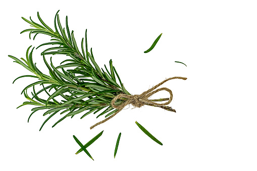 small bouquet of rosemary tied with jan string in front of white background