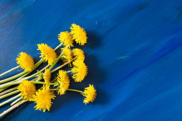 kleine boeket van gele paardebloemen ligt op trendy helder blauw geschilderde achtergrond. zomer concept. - meerdere lagen effect stockfoto's en -beelden