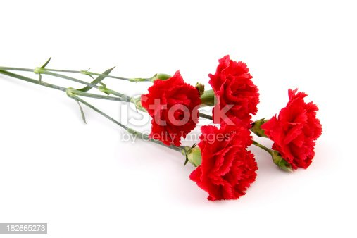 Soft focus on mini red carnations.