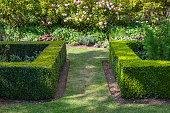 Short box hedge border in a garden