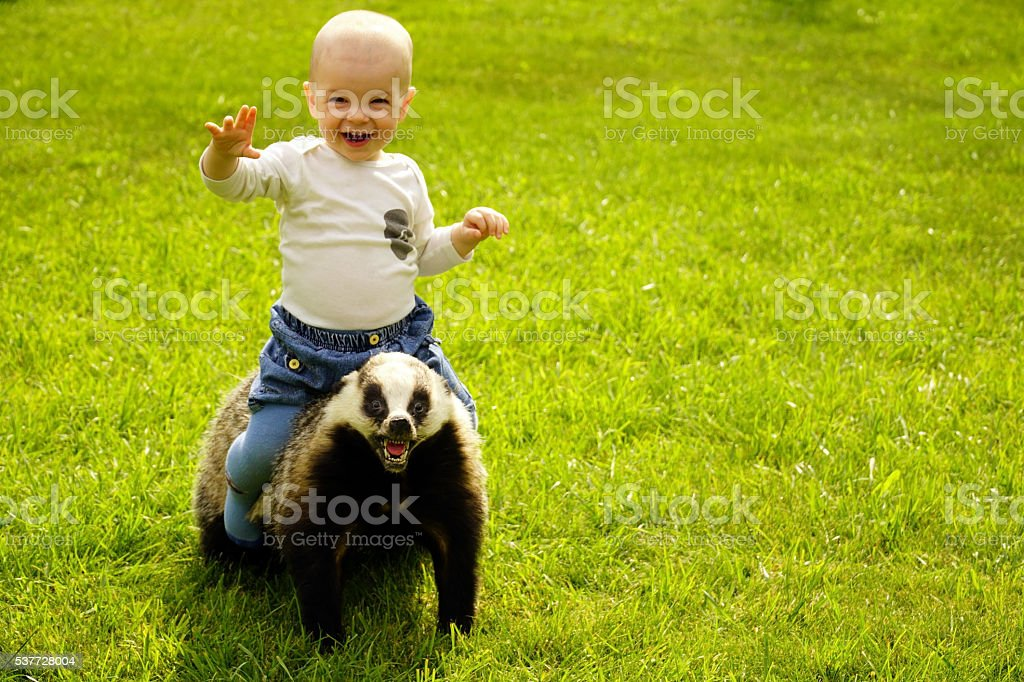 small boy sits astride a scarecrow badger stock photo