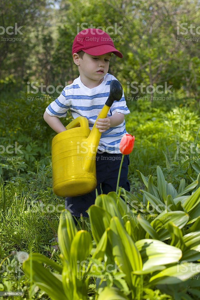 Small boy watering flowers royalty-free stock photo