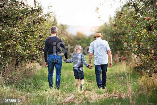istock A small boy with father and grandfather walking in apple orchard in autumn. 1067889134