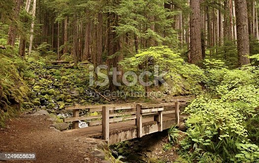 A small bridge over a trail in the Sol Duc Valley of the Olympic National Park