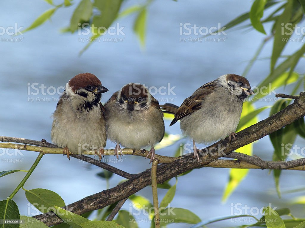 Small brood royalty-free stock photo