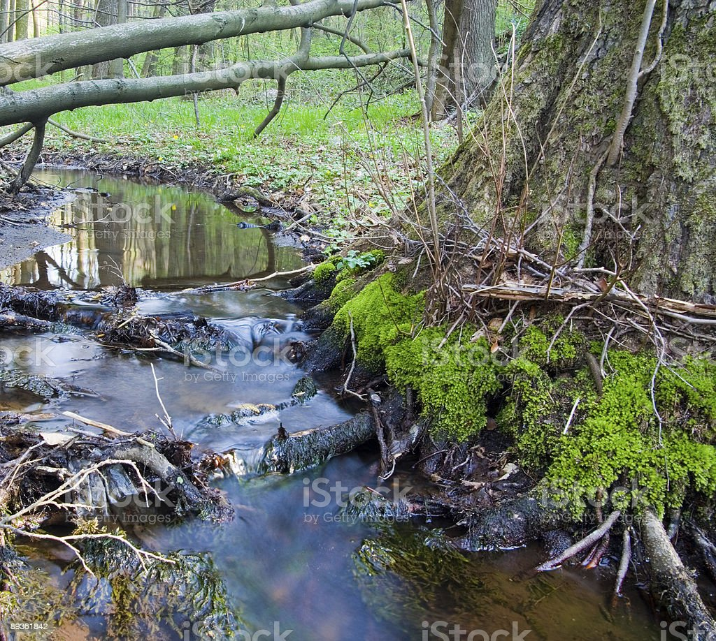 Small brook meander royalty free stockfoto