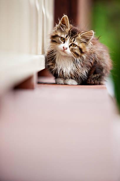 Small brown and white kitten sitting on a ledge picture id123014114?b=1&k=6&m=123014114&s=612x612&w=0&h=ustrwbxgzt2ghjnbomaamztlchsyqfnwrg27lwkrmfq=