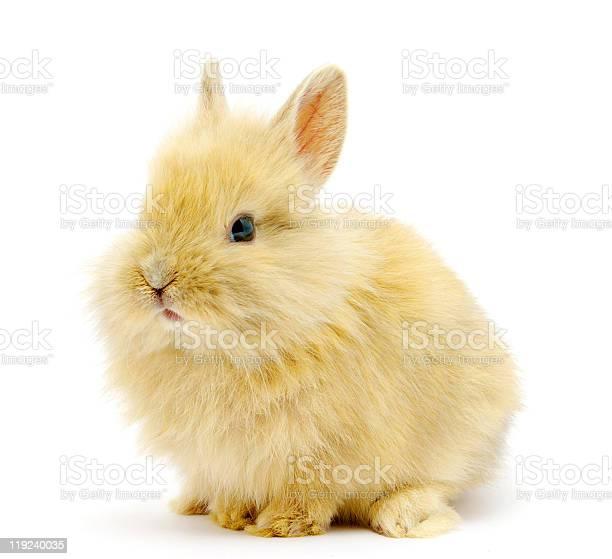 Small brown rabbit picture id119240035?b=1&k=6&m=119240035&s=612x612&h=qwakb9no9jzlijmgpew66p8rfkw7 ch8i6hhydlhxji=