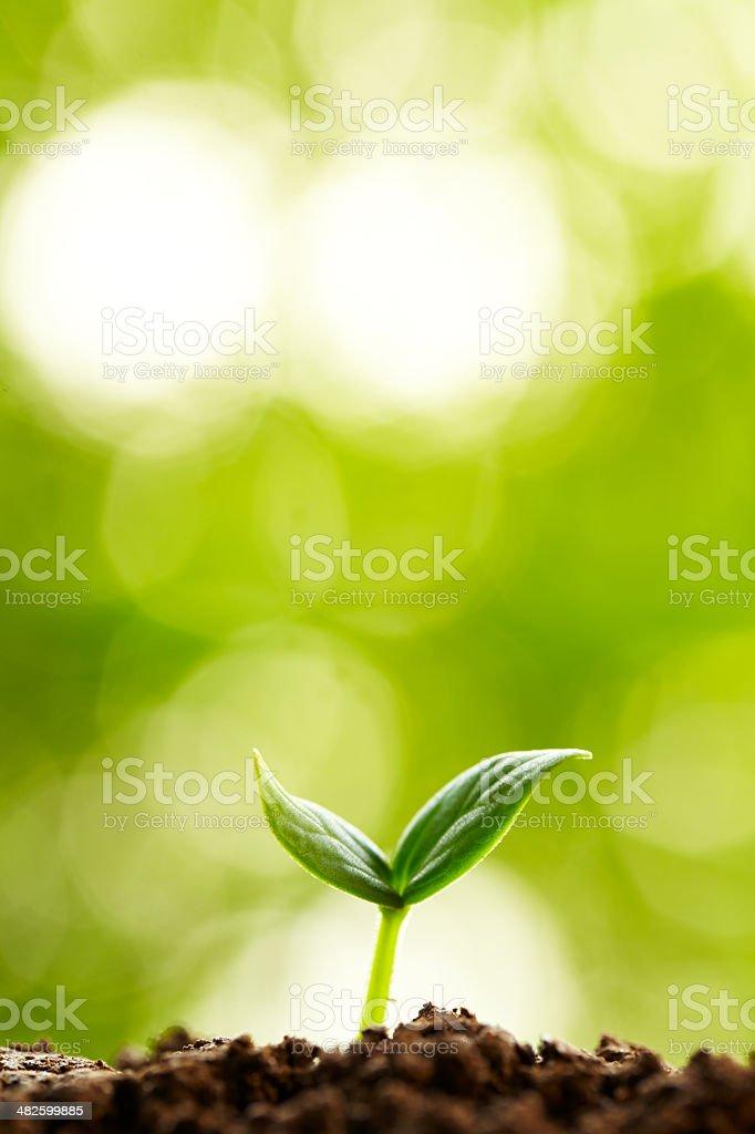 small bud growing in spring stock photo