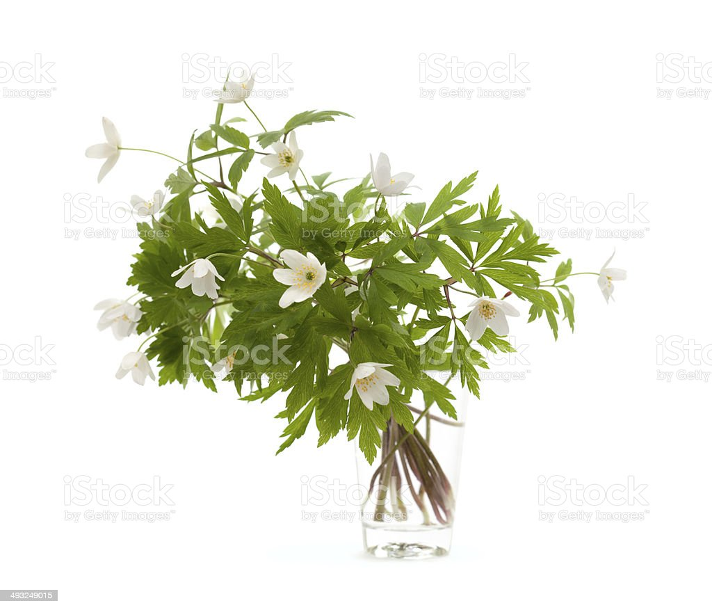 small bunch of anemonr nemorosa stock photo
