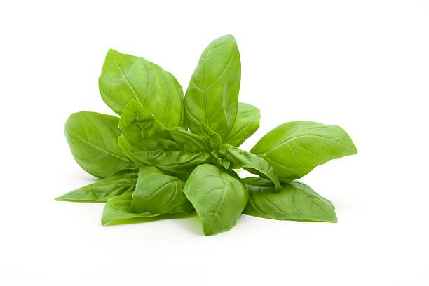 a small bunch of fresh basil against a white background - basil stock photos and pictures