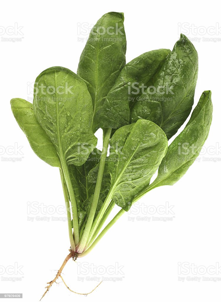 Small bunch of green spinach on a white background  stock photo