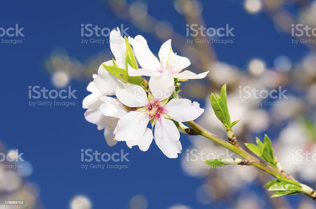 1 pequeño ramo de flores de primavera blanco foto de stock libre de derechos