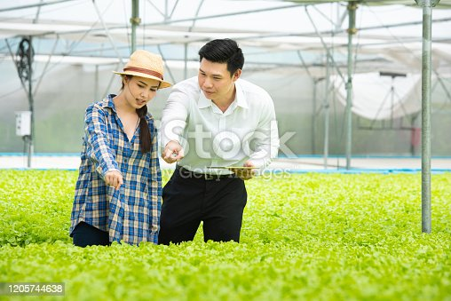 1096949092 istock photo Small business entrepreneur and organic vegetable farm concept. 1205744638