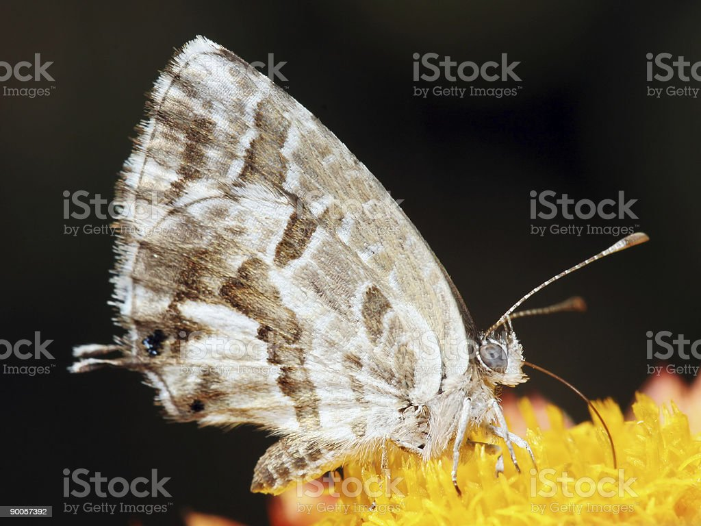 Small butterfly feeding stock photo