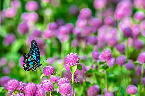 Small butterfly in garden picture id635741814?b=1&k=6&m=635741814&s=612x612&w=0&h=e0 ivyj5bzz9ql bep3oiaxbbjf8kvmdcdvpfvupq1u=