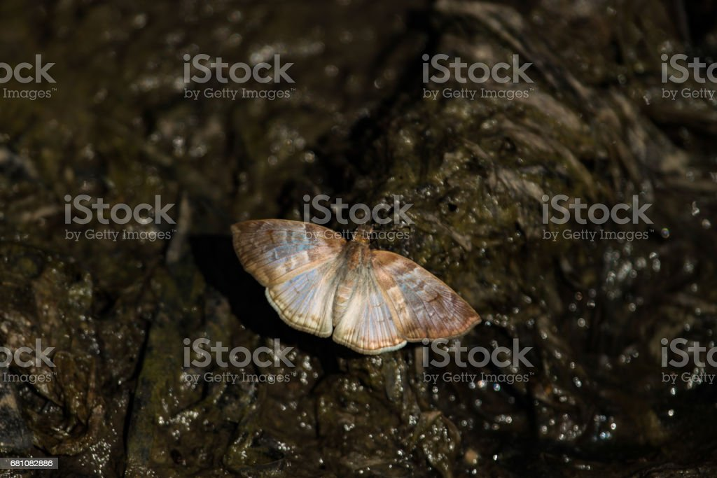 Small butterfly of gray metallic color. royalty-free stock photo