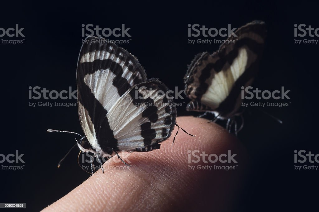 Small butterfly on a finger royalty-free stock photo